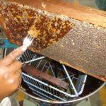 jusqu'à la récolte du miel