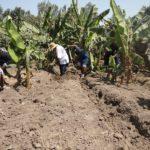 L'arrosage des plantations se fait gràce à l'eau du petit canal qui irrigue CIMA