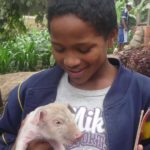 CIMA élève aussi des cochons.