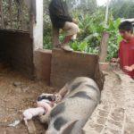 Les enfants voient naître les animaux au centre et suivent leur évolution en se chargeant de leurs soins.