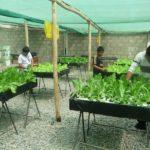 L'atelier hydroponie offre aux enfants une opportunité de se former à une nouvelle technique et de travailler en groupe.