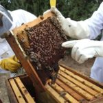 de la plantation de plantes méllifères à l'entretien des ruches et des abeilles