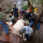 Les enfants suivent et participent au processus d'élevage jusqu'à sa dernière phase, afin de pouvoir consommer la viande.